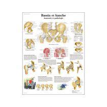 Bassin et hanche -Anatomie et pathologie