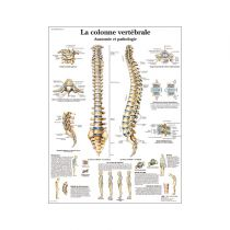 La colonne vertébrale, Anatomie et pathologie